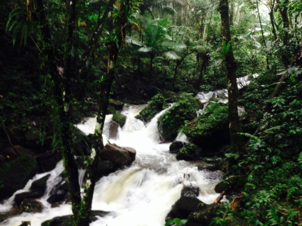 One of the many waterfalls at El Yunque.